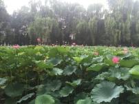 sichuan-2016-part-8